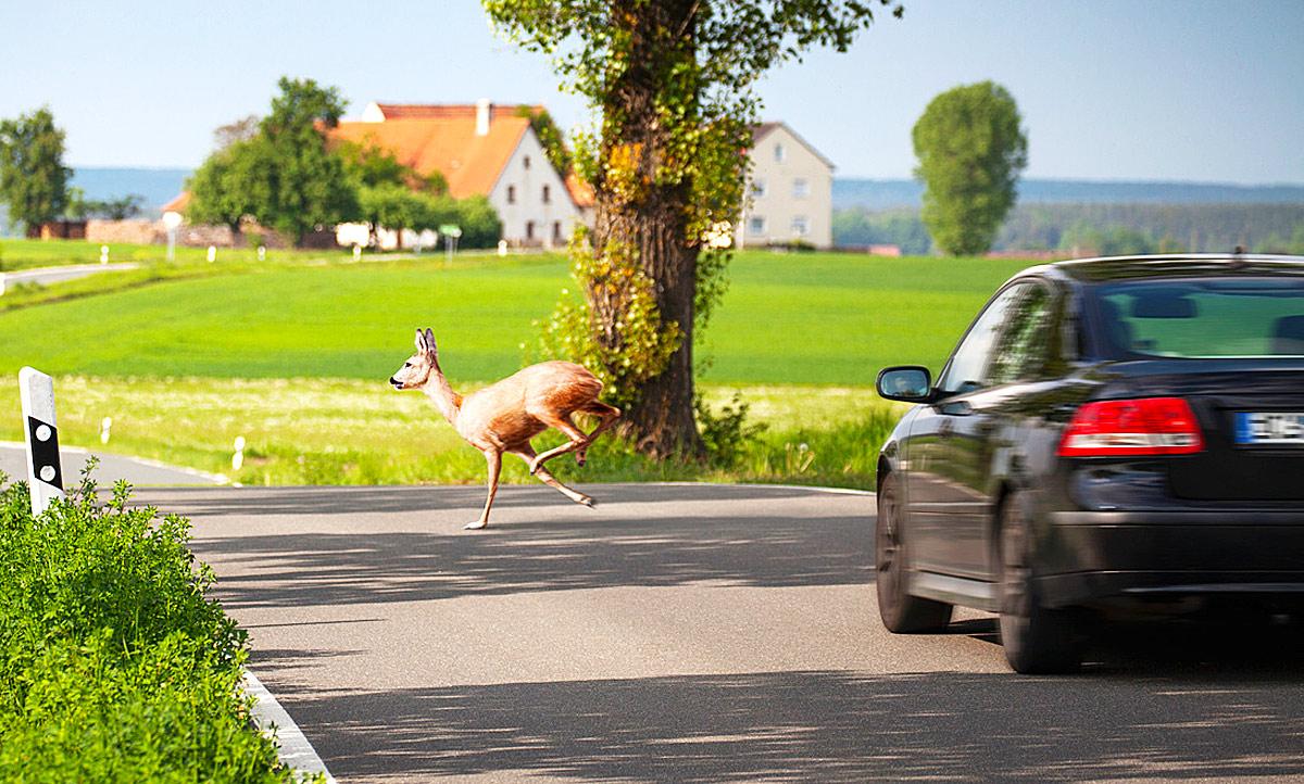 Wildunfall mit Auto: Was tun? & Versicherung | autozeitung.de