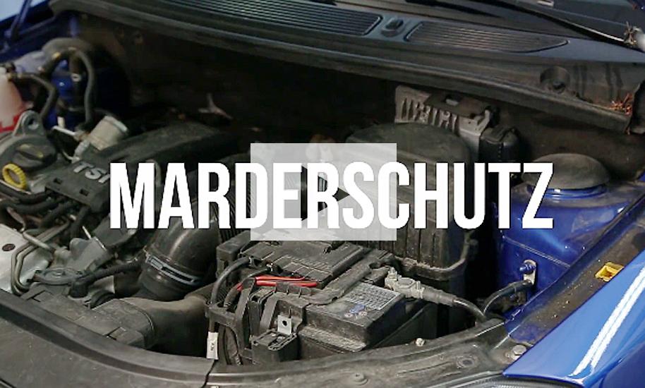 Was Hilft Gegen Marder marderschreck für s auto autozeitung de