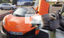 Esel beißt in orangen McLaren 650 S: Video