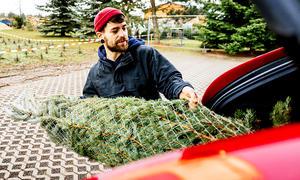 Weihnachtsbaum-Transport