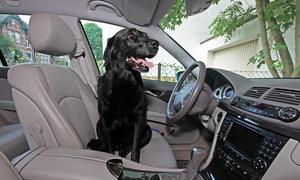 Tiertransport im Auto Ratgeber Tipps Hund Katze Pferd