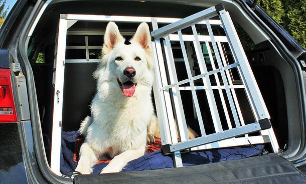 Hunde im Auto: Was beim Transport zu beachten ist