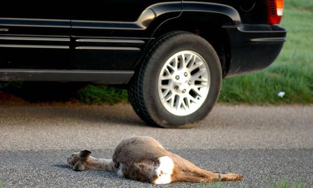 Wildunfall-Statistik 2012 Auto Wild Unfall Versicherung Teilkasko