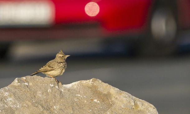 Vogelkot vom Auto entfernen