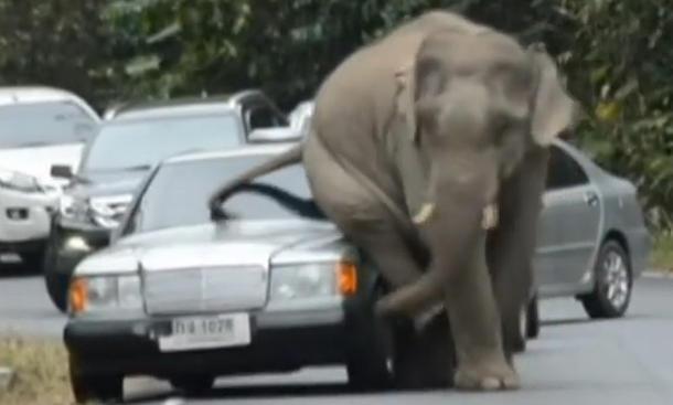 Frisch aus dem Netz: Elefantöser Juckreiz